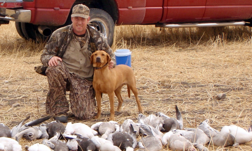 British Fox Red Labrador Retrievers